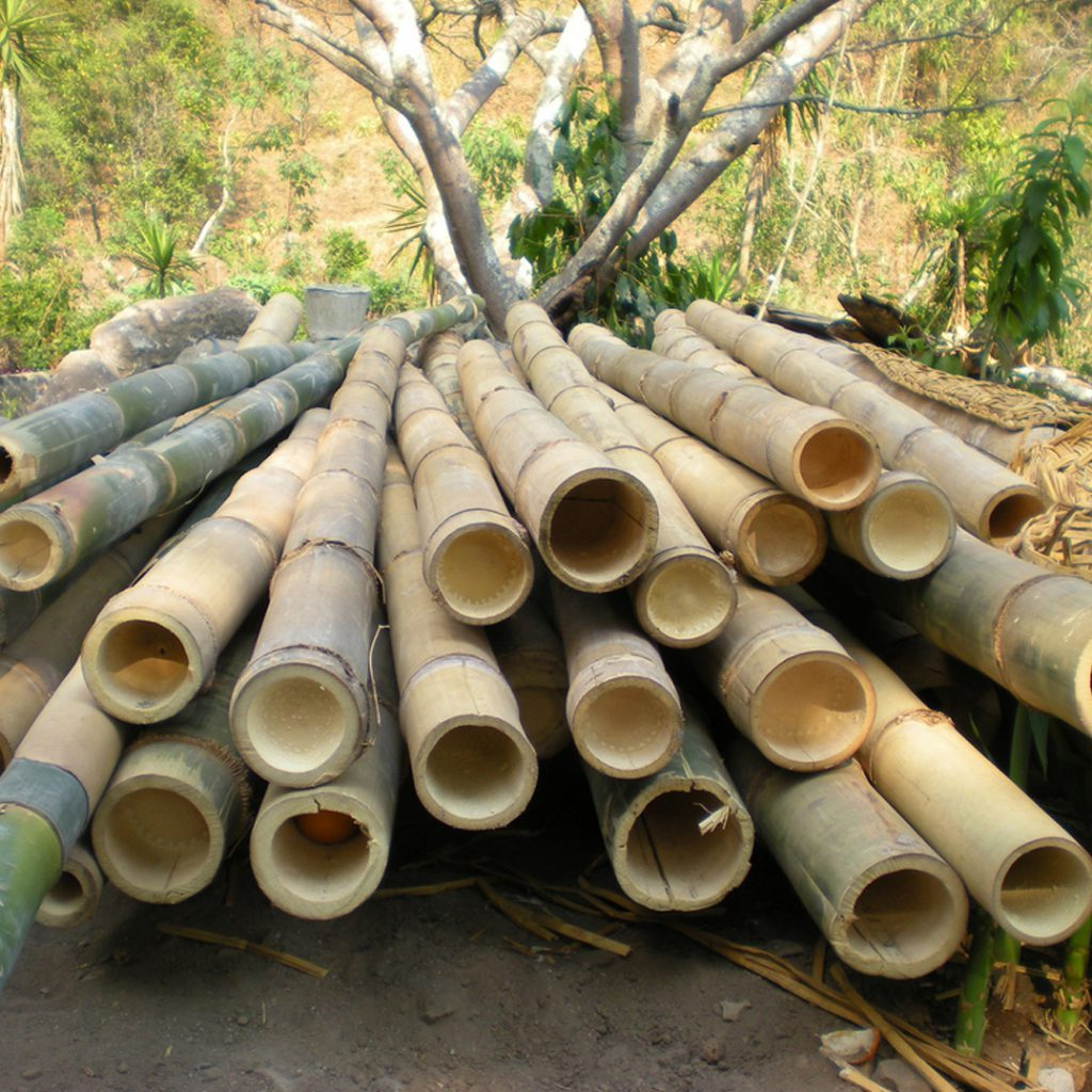 crop of bamboo